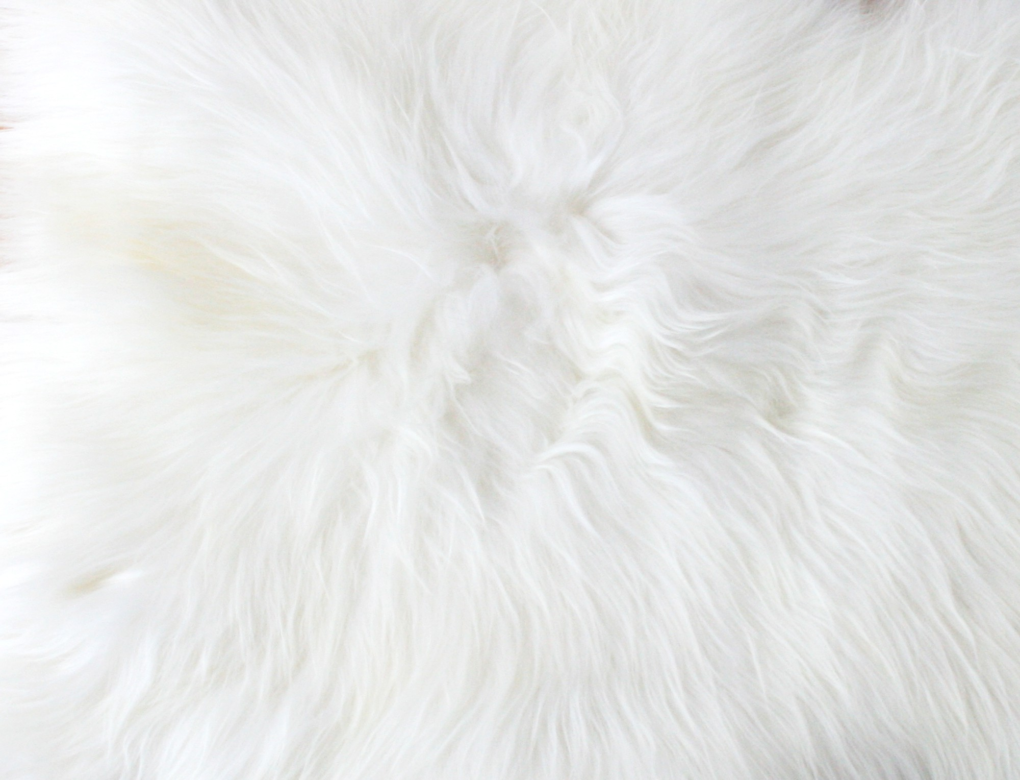 Peau de mouton islandais blanc Tannage écologique