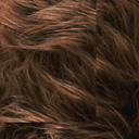 Mouton Islandais teinte marron