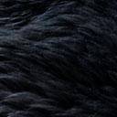 Mouton Australien teinté noir